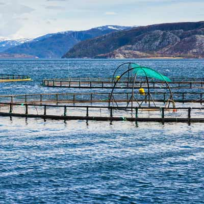 fiskeoppdrettsanlegg